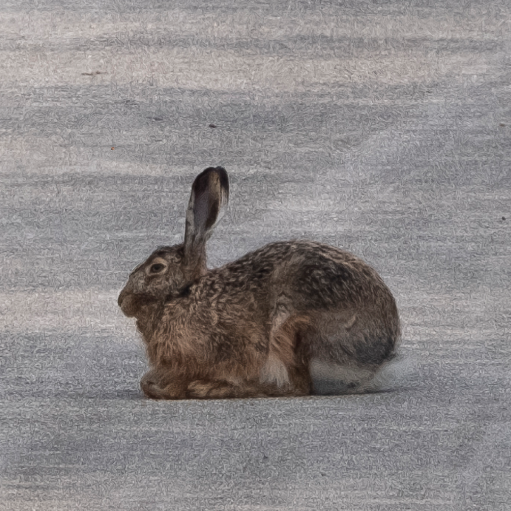 hare 01 © Chris Zintzen @ panAm productions